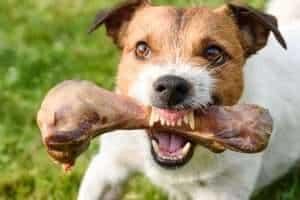 Aggressive Behavior In Maltese Dogs