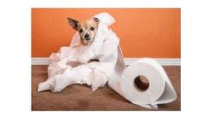what happens if a dog eats toilet paper