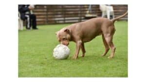 are pitbulls good with children