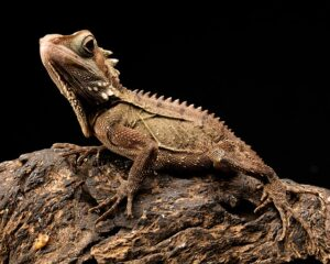 are bearded dragon safe