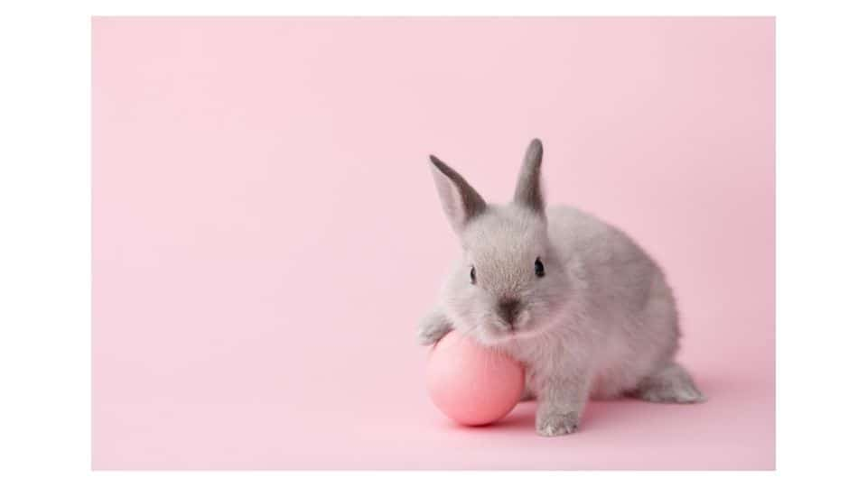 why rabbits are attractive