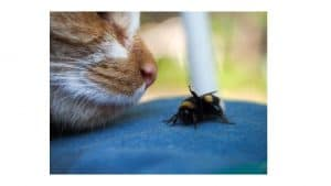 cats eating insects