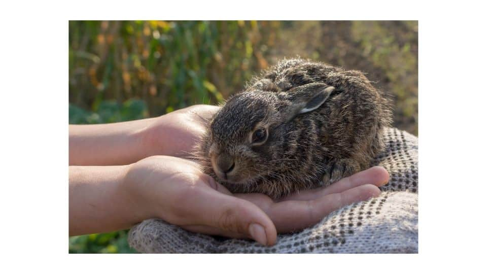 are rabbits affectionate animals