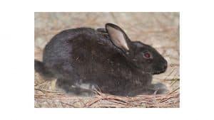 bunny active at night