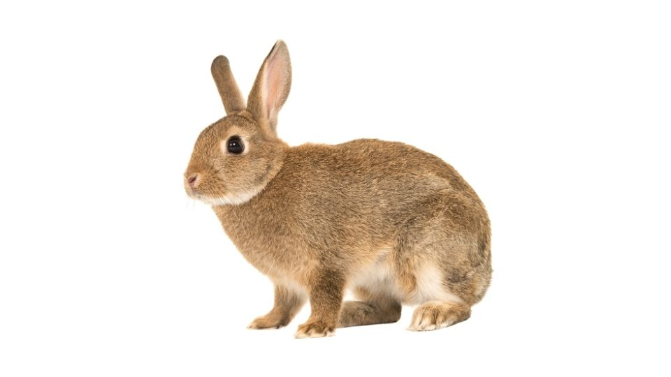 do bunnies fart?