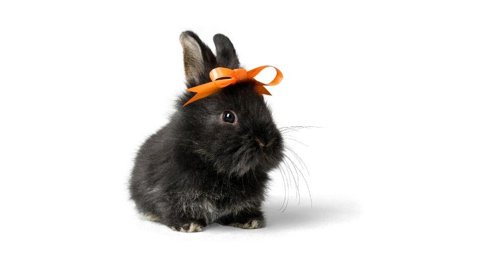 getting a rabbit at petsmart