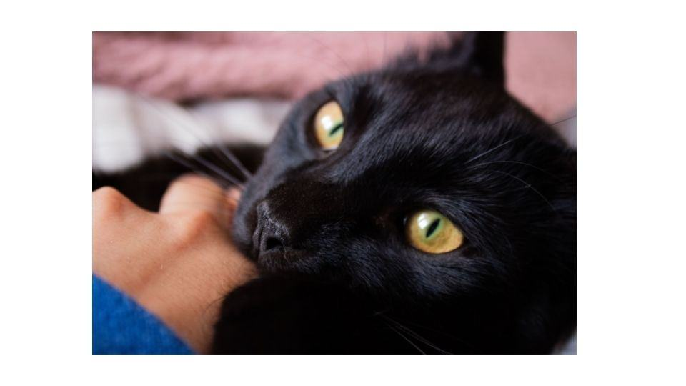 why does my cat bite me when i sleep