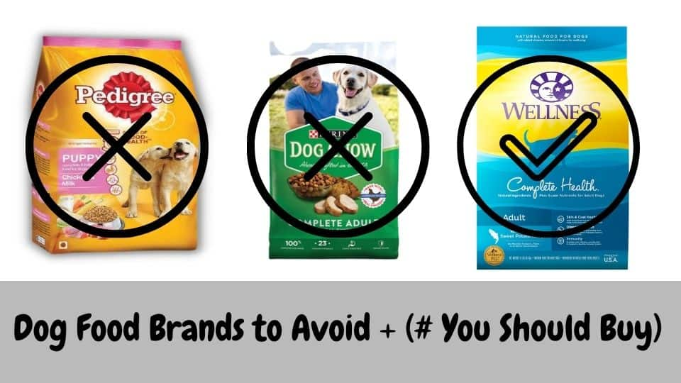 Dog Food Brands to Avoid + (# You Should Buy)