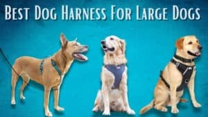 Best Dog Harness For Large Dogs